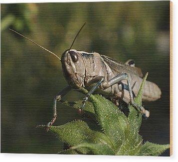 Grasshopper 2 Wood Print by Ernie Echols