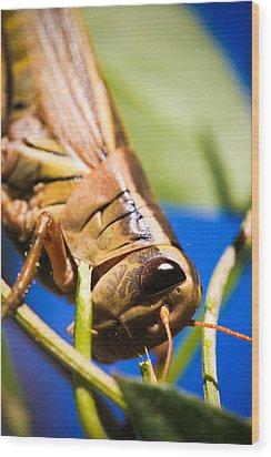 Grasshopper Wood Print by Christy Patino