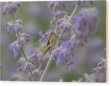 Grasshopper Wood Print by Michel DesRoches