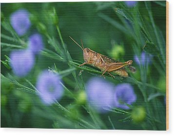 Grasshopper Wood Print by Mike Grandmailson