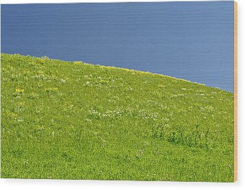 Grassy Slope View Wood Print by Roderick Bley