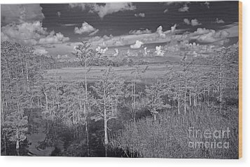 Grassy Waters 3 Bw Wood Print by Larry Nieland