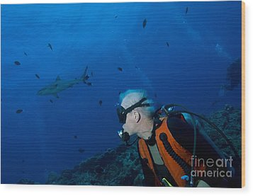 Gray Reef Shark With Diver, Papua New Wood Print by Steve Jones