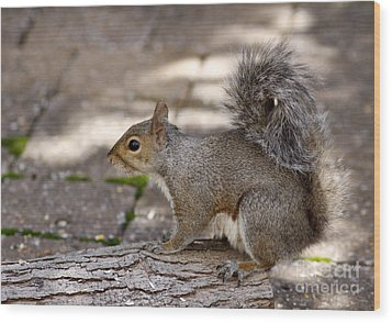 Wood Print featuring the photograph Gray Squirrel by Denise Pohl