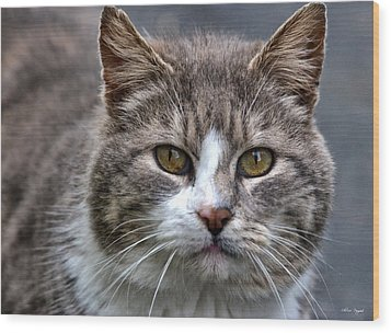 Gray Tabby Tux Cat Wood Print
