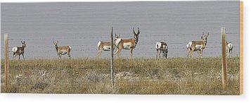 Grazing Antelope Wood Print by Bruce Bley