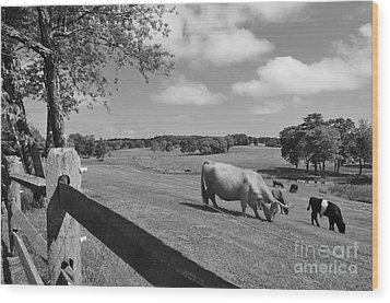 Grazing The Day Away Wood Print by Catherine Reusch Daley