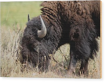 Grazing The Yellowstone Valley Wood Print by David Dunham