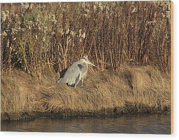 Great Blue Heron 2 Wood Print