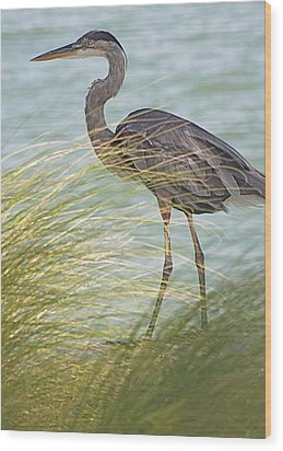 Great Blue Heron And Grass Wood Print by Jeanne Kay Juhos