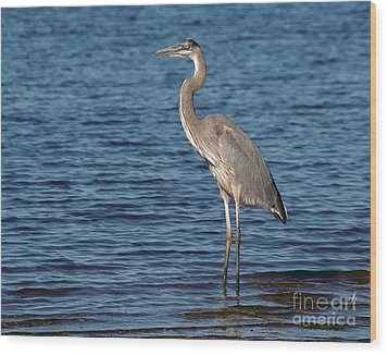 Great Blue Heron Wood Print by Art Whitton