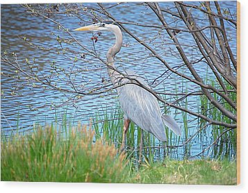 Wood Print featuring the photograph Great Blue Heron At Pond's Edge by Mary McAvoy