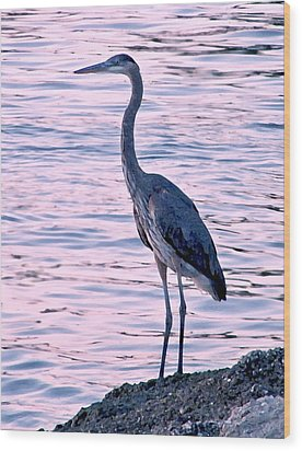 Wood Print featuring the photograph Great Blue Heron by Brian Wright