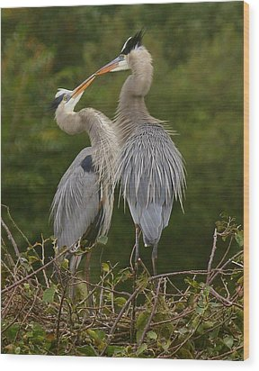 Wood Print featuring the photograph Great Blue Heron Couple by Myrna Bradshaw