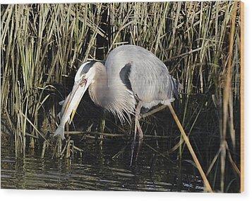 Great Blue Heron Fishing Wood Print