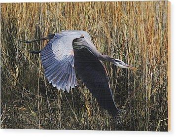 Great Blue Heron Flying In The Marsh Wood Print by Paulette Thomas
