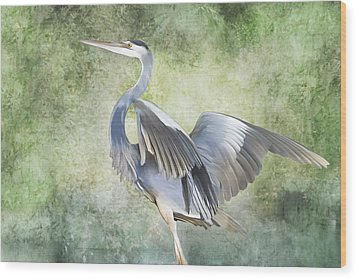 Great Blue Heron Wood Print by Francesa Miller