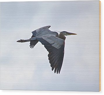 Great Blue Heron In Cloudy Sky Wood Print by Mary McAvoy