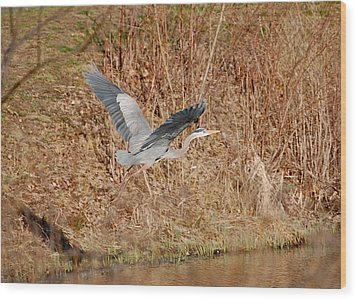 Great Blue Heron In Flight Wood Print by Mary McAvoy