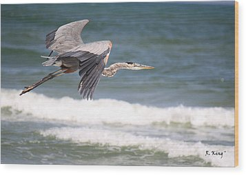 Great Blue Heron In Flight Wood Print