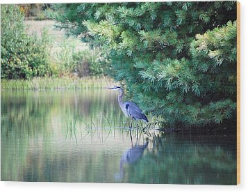 Great Blue Heron In Pines Wood Print by Mary McAvoy