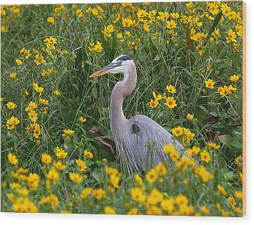 Wood Print featuring the photograph Great Blue Heron In The Flowers by Myrna Bradshaw