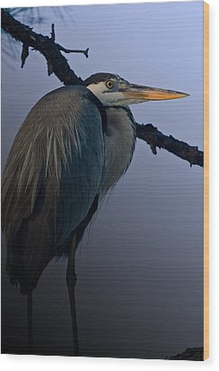 Great Blue Heron In The Tree Wood Print
