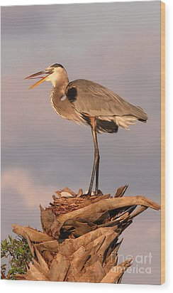 Great Blue Heron Wood Print by Jennifer Zelik