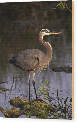 Great Blue Heron Wood Print by Natural Selection Ralph Curtin