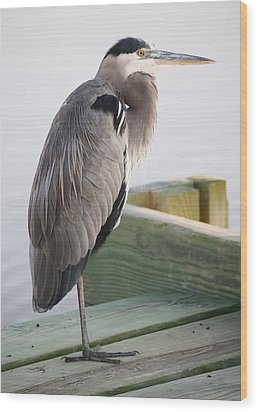 Great Blue Heron On The Dock Wood Print by Paulette Thomas