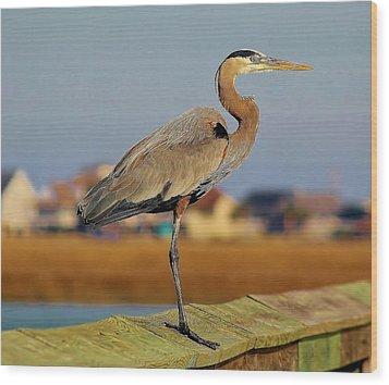 Great Blue Heron On The Marsh Wood Print by Paulette Thomas