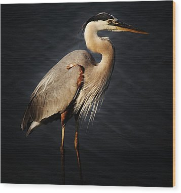Great Blue Heron Wood Print by Paulette Thomas