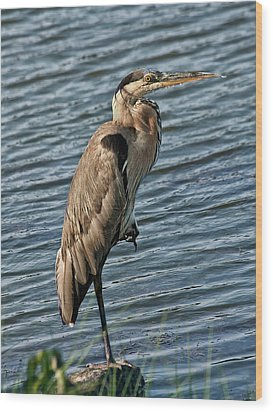 Great Blue Heron Wood Print by Sandra Anderson