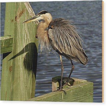 Great Blue Heron Shadow Wood Print by Paulette Thomas