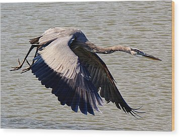Great Blue Heron Soaring Wood Print by Paulette Thomas