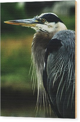 Great Blue Heron Wood Print by Steven A Bash