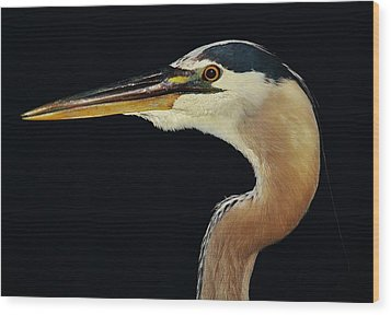 Great Blue Heron Up Close Wood Print by Paulette Thomas