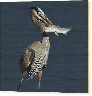 Great Blue Heron With Fish Wood Print by Paulette Thomas