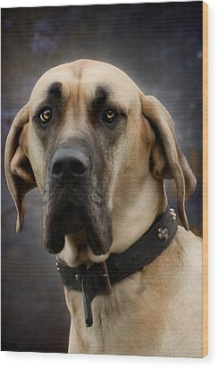 Wood Print featuring the photograph Great Dane Dog Portrait by Ethiriel  Photography