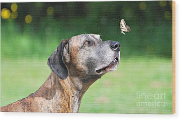 Great Dane Rufus Dagoofus With Butterfly Wood Print by Lila Fisher-Wenzel