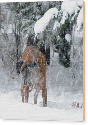 Great Dane Rufus Looking Into A Blizzard Wood Print by Lila Fisher-Wenzel