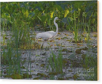 Great Egret 2 Wood Print by September  Stone