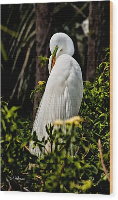Great Egret Wood Print by Christopher Holmes
