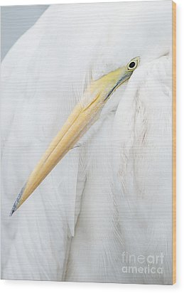 Wood Print featuring the photograph Great Egret by Doug Herr