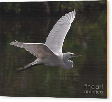 Great Egret Flying Wood Print by Art Whitton