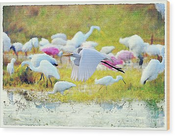 Wood Print featuring the photograph Great Egret Flying by Dan Friend
