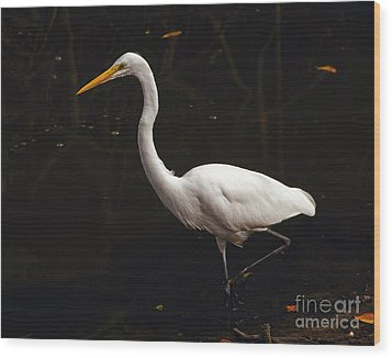 Great Egret Hunting Wood Print by Art Whitton