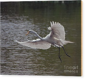 Wood Print featuring the photograph Great Egret In Flight by Art Whitton