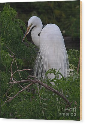 Great Egret Nesting Wood Print by Art Whitton