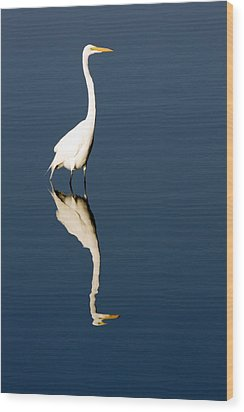 Great Egret Reflected Wood Print by Sally Weigand